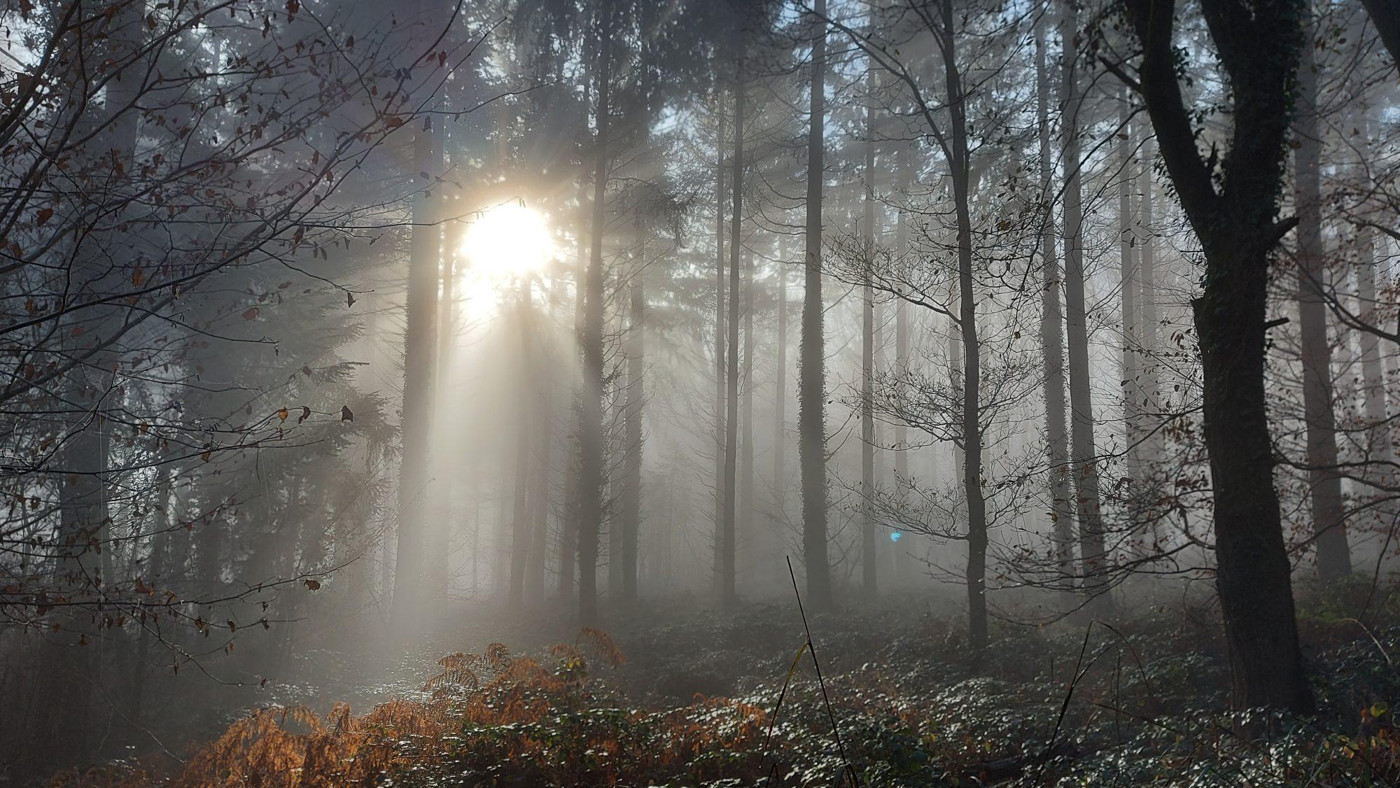 Sacred Tree Spirit